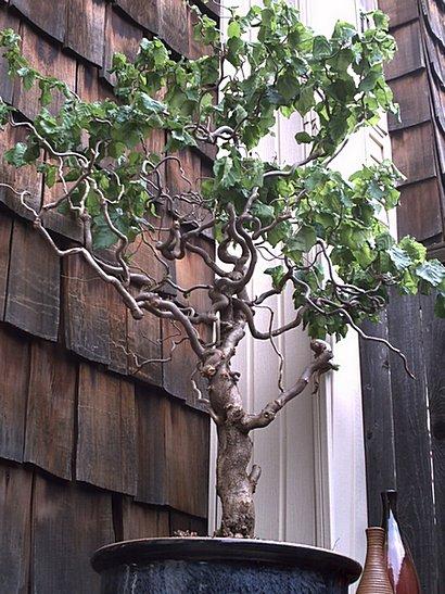 Randy Amp Gregory S Tree
